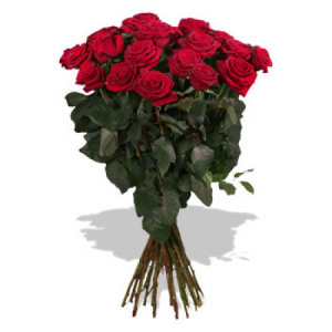 One Dozen stunning Red Roses for your sweetheart