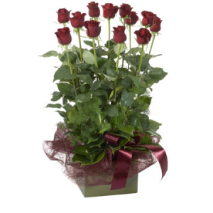 Box Arrangement of Beautiful Red Roses
